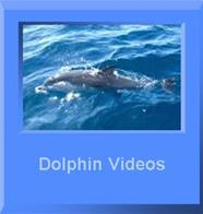 dolphins square button